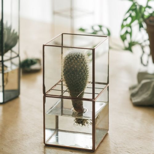 HydroCUBE Terrarium without Plants