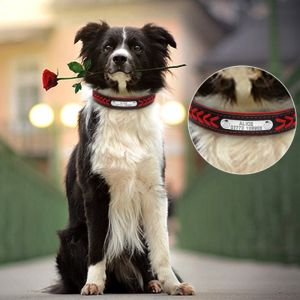 Personalized Pet Collars